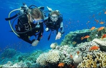 Scuba diving dive packages